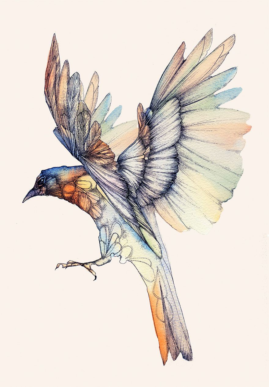 Birds Tattoos Illustrations: I Make Watercolor And Ink Illustrations Inspired By Music