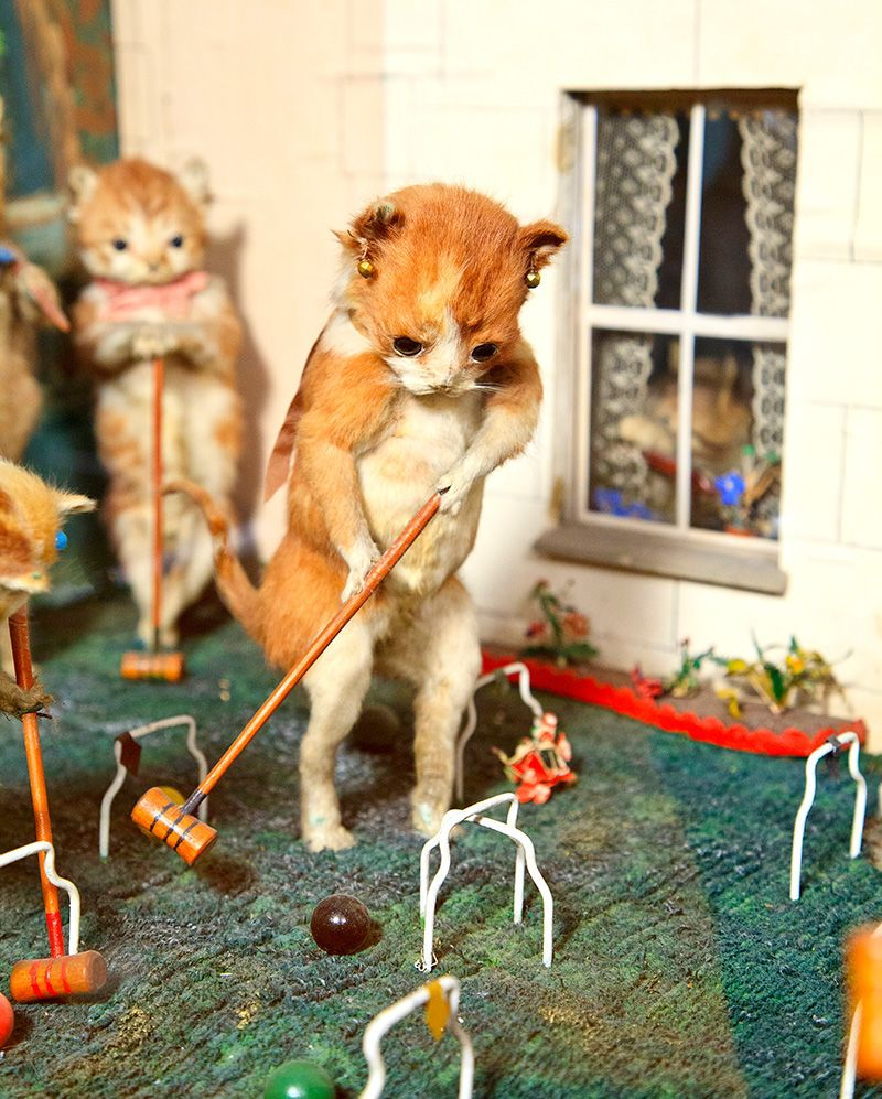 oh my goodness - taxidermy kittens playing croquet...how amazingly bizarre