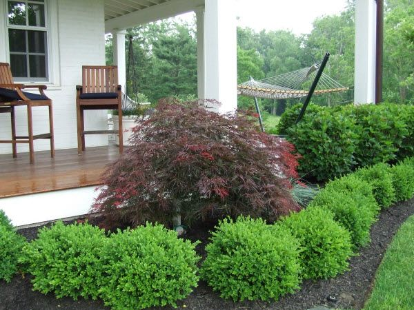 Green velvet boxwood keep as shrub vs hedge patio for Green bushes for landscaping