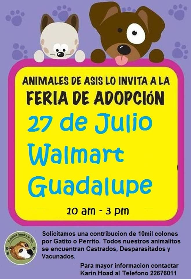 FERIA DE ADOPCION!! ADOPTION FAIR!!
