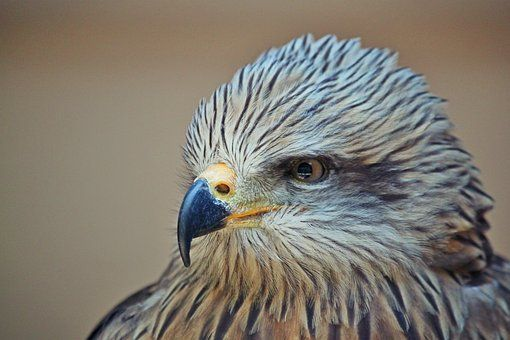 17 Popular Types Of Largest Eagles Species In The World Eagle Bird