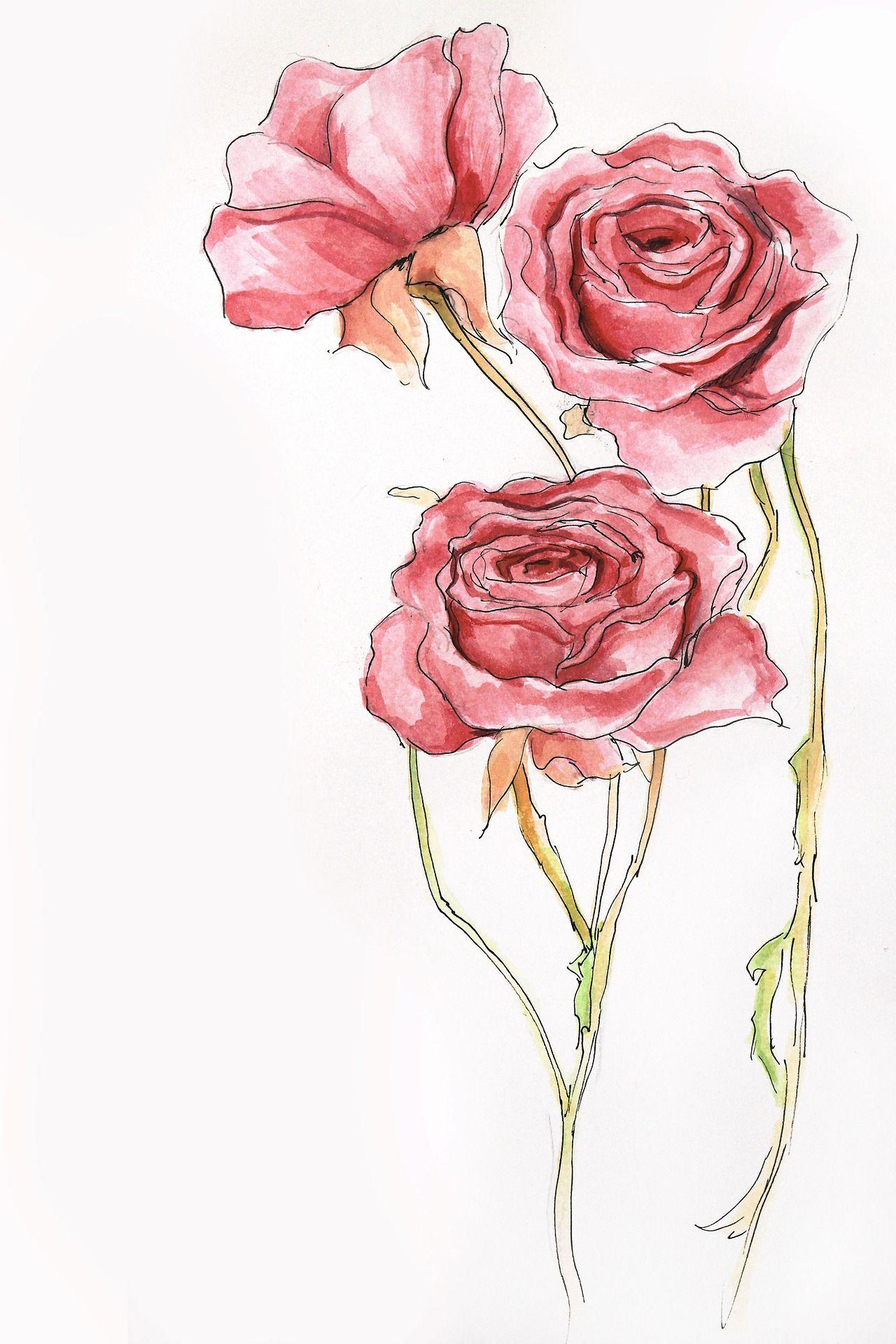 Watercolor Rose Painting Tumblr Disegni Di Rose Disegno Fiori