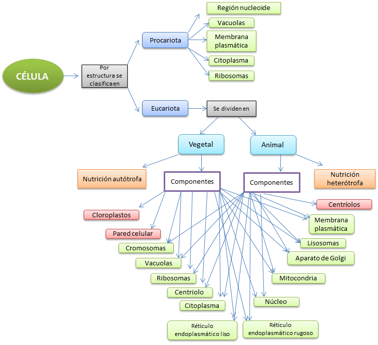 Biomoléculas Y La Célula Celulas Biología Membrana Plasmática