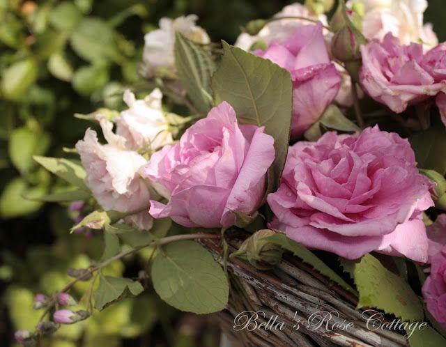 Bellas Rose Cottage