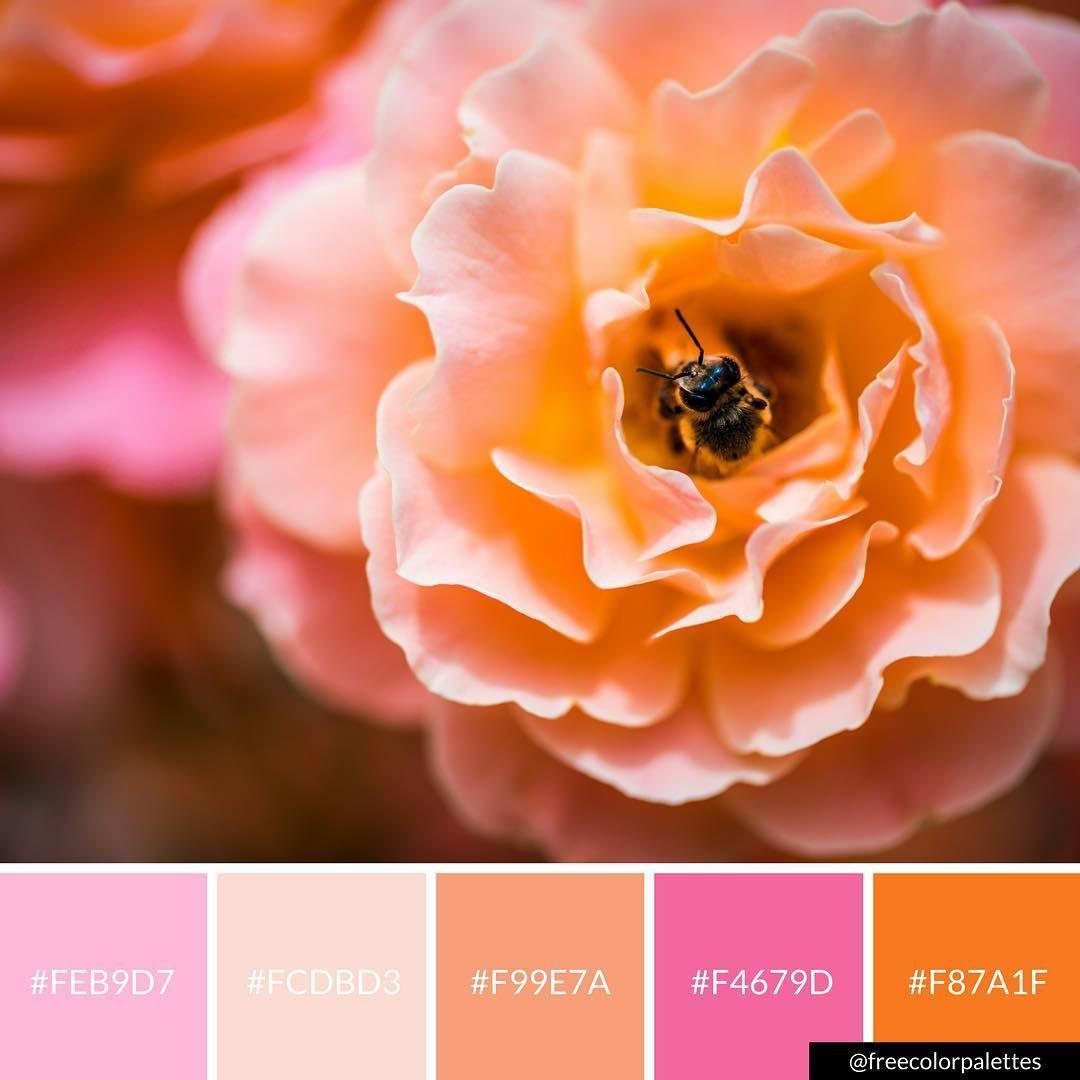 Flowers Spring Pink And Orange Color Palette Inspiration Digital Art Brand