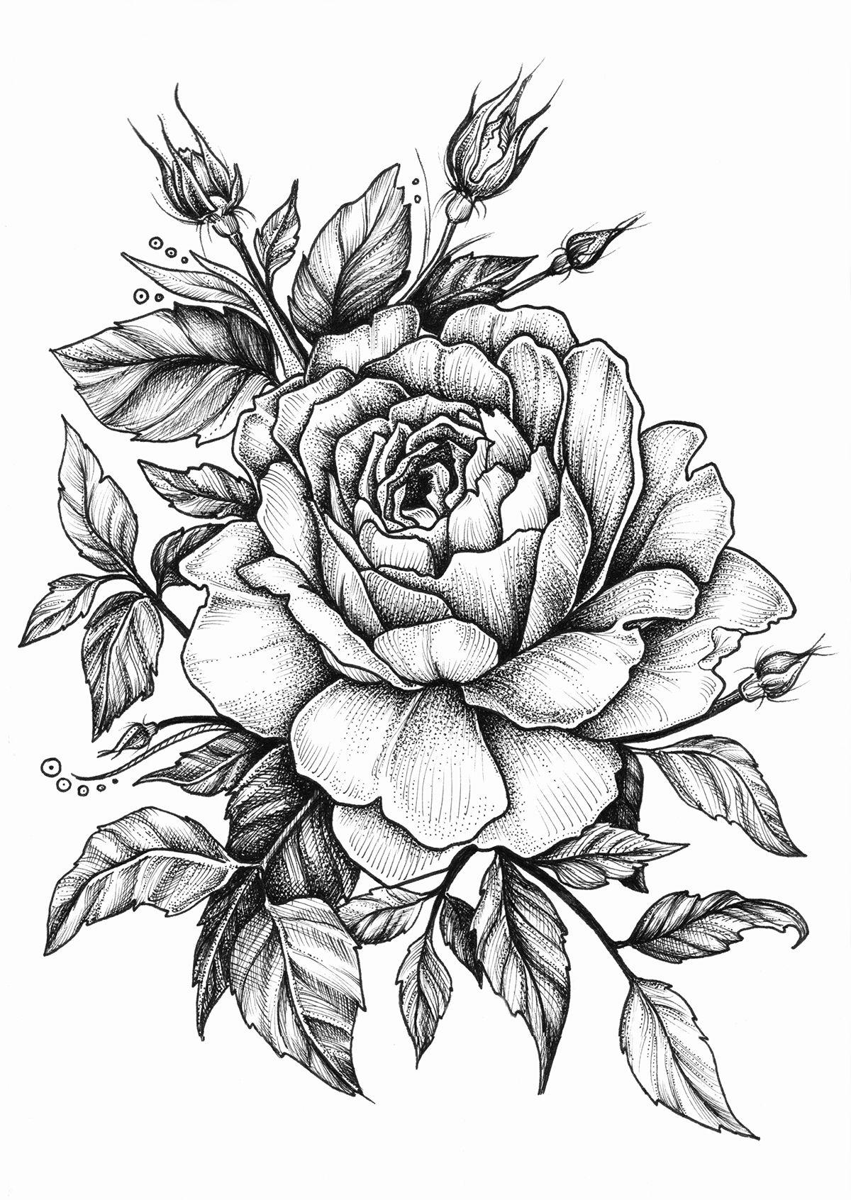 rose on Behance Ideias de tatuagens, Desenhos de flores