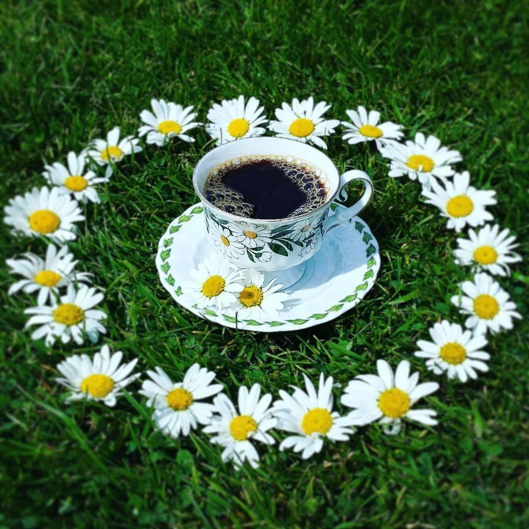 café au ras des pâquerettes parce que plus la vie est
