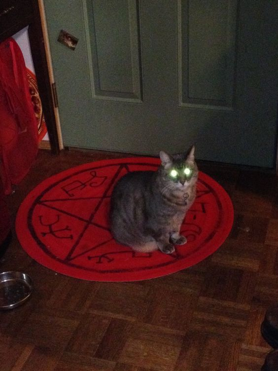 She Is Old And Evil I Have Tred Her On The Ikea Rug Painted A Devil S Trap For My Supernatural Party