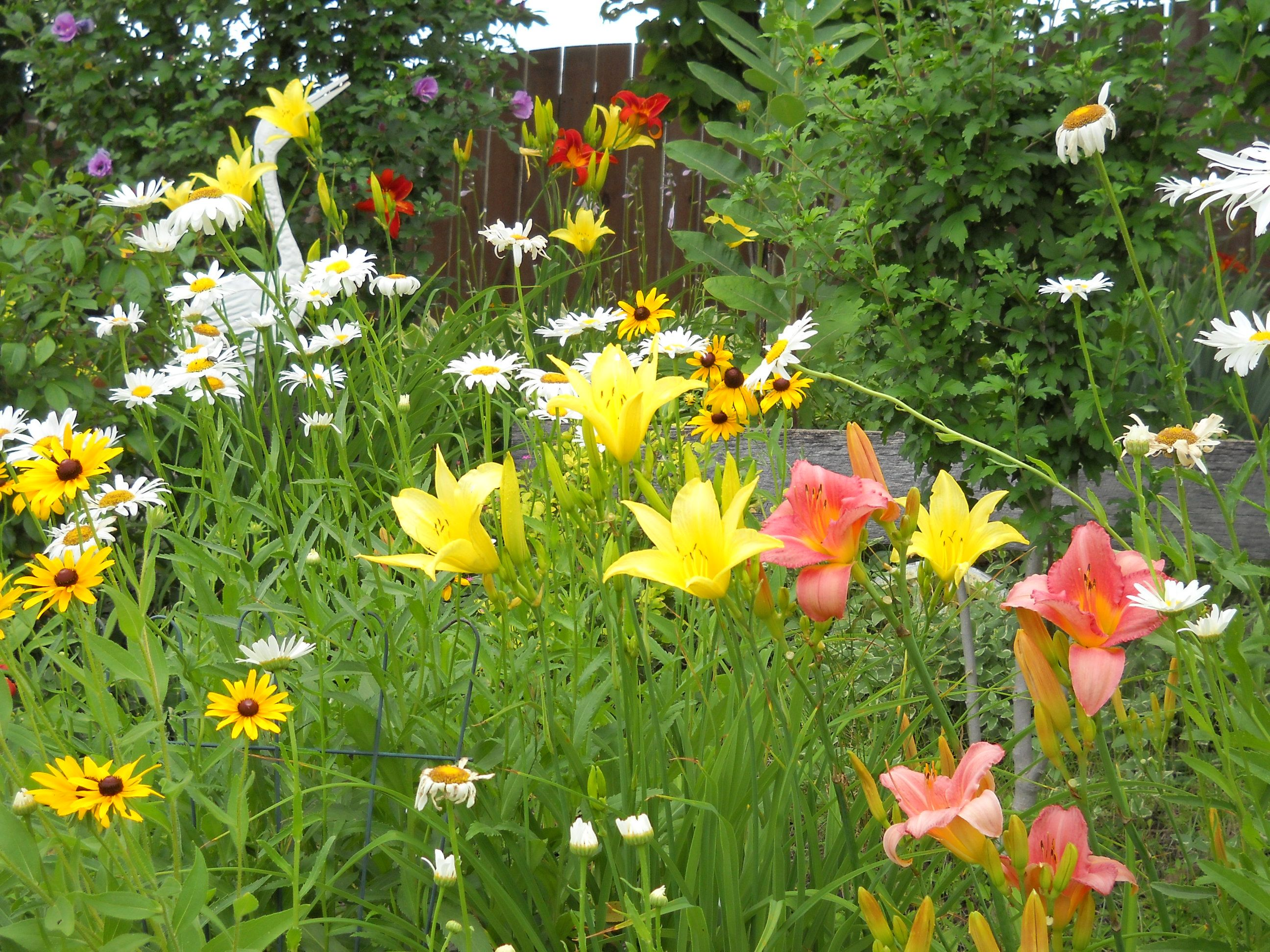 Daylily's - So many colors to choose from, and so easy to grow.