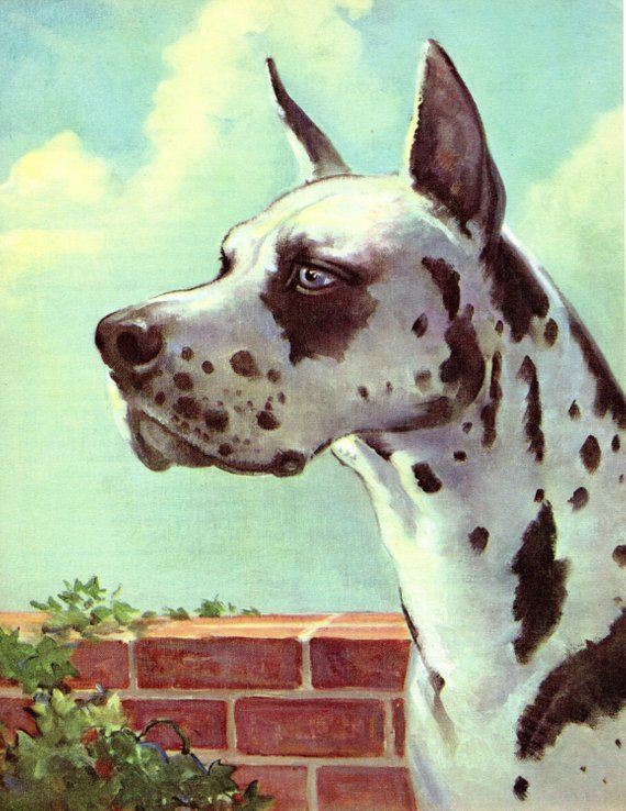 The Great Dane 1950 S Book Print Dog Illustration By Wesley