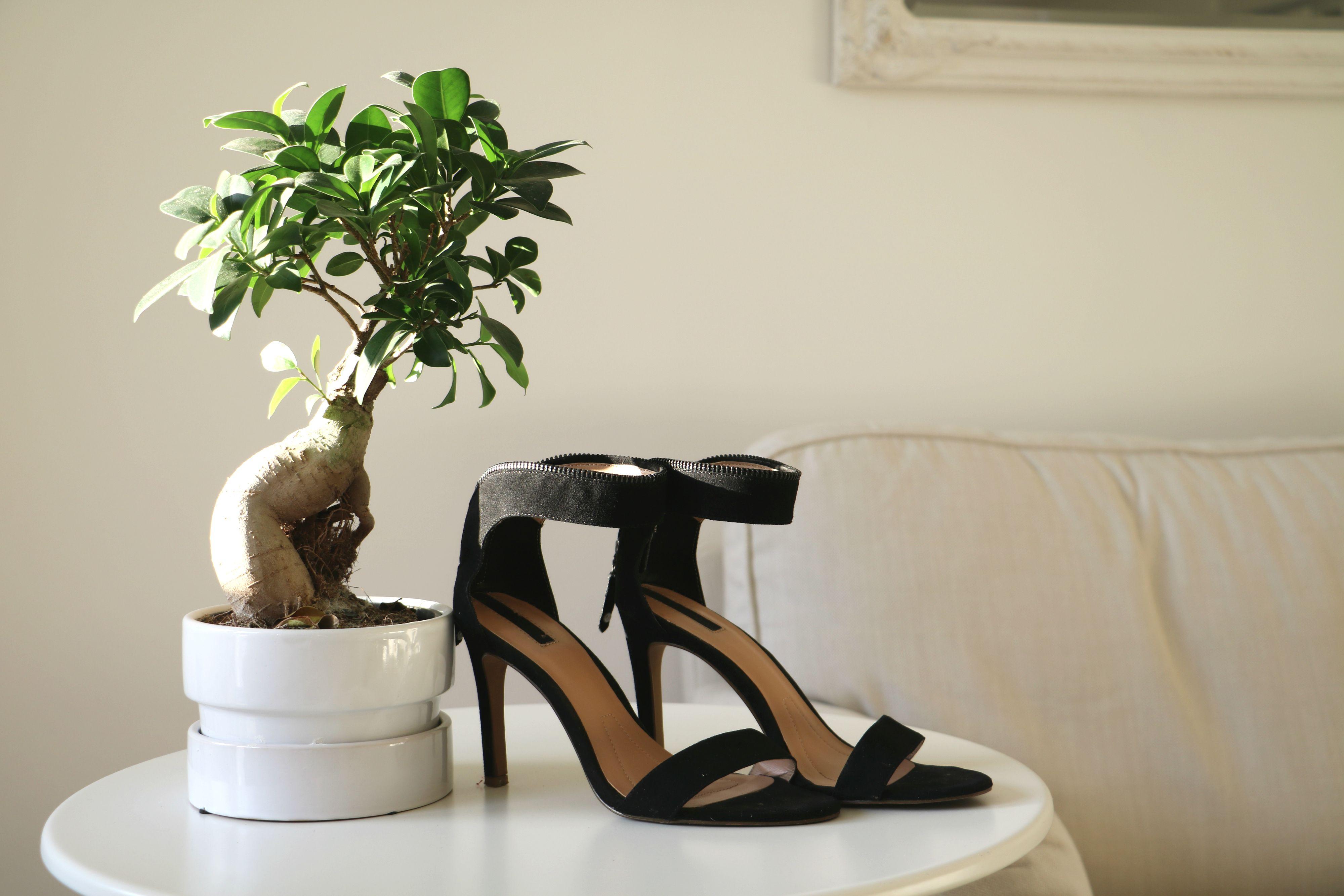 favorites, shoes, minimal style