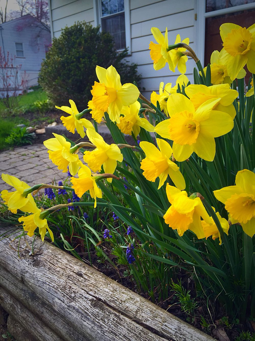 Pretty Yellow Flowers Artsy Pinterest Yellow Flowers And Artsy