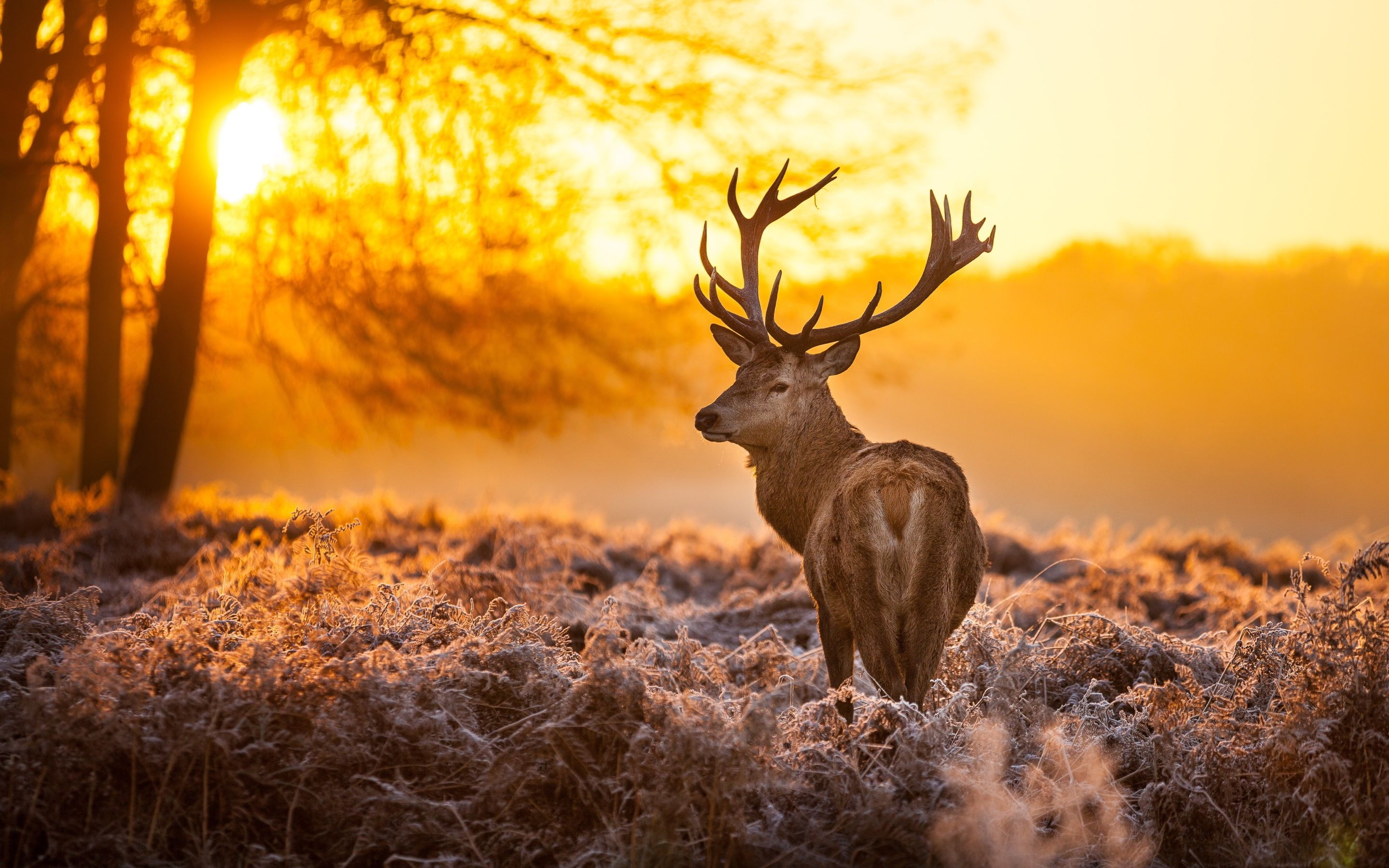 deer wallpapers get free top quality deer wallpapers for your desktop pc background ios