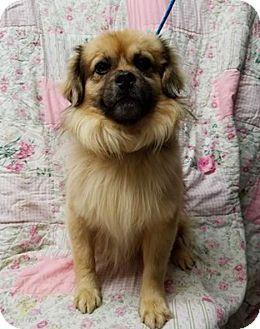 Pin By I Love Dogs On Tibetan Spaniel Spaniel Dog Dog Breeds Dogs