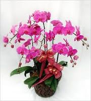 Rangkaian Bunga Anggrek Bulan Toko Bunga By Florist Jakarta Orchids Florist Floral Wreath