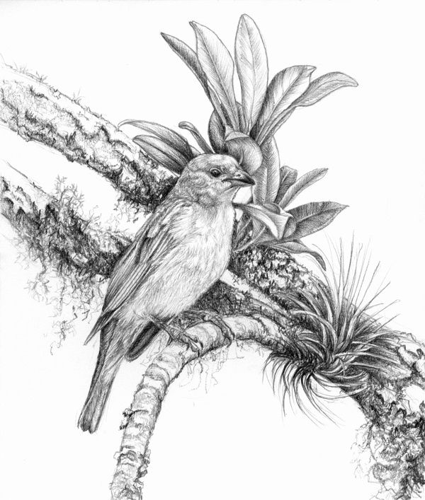 Beautiful Nature Pencil Drawings: Pin By Ying Chen On 小象 In 2019