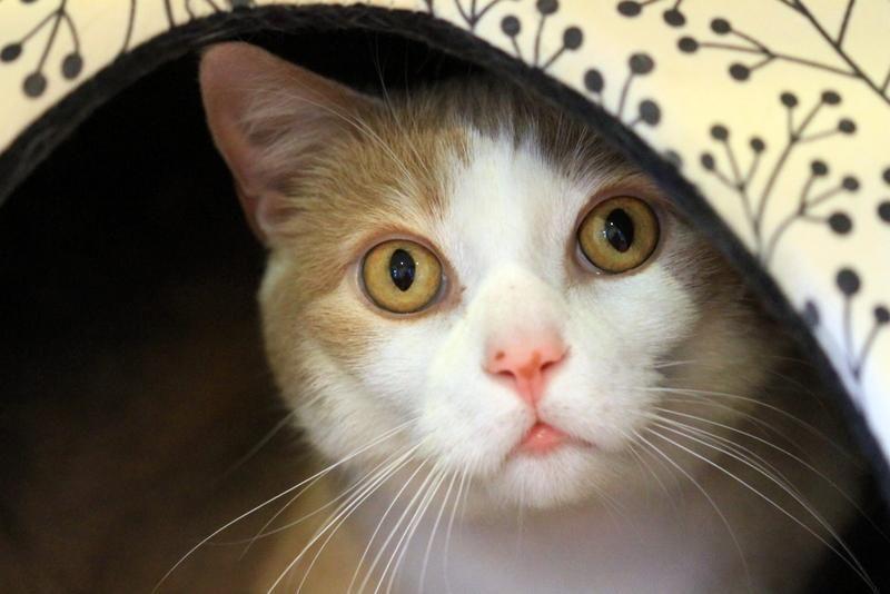 Adopt Gobi On Animal Welfare League Animals Humane Society