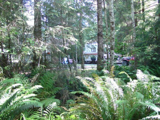 Mystic Forest Rv Rv Tent Camping In Klamath California 15875 Us Highway 101 Klamath Ca 95548 Mystic Fo California Parks Klamath California Park Photos