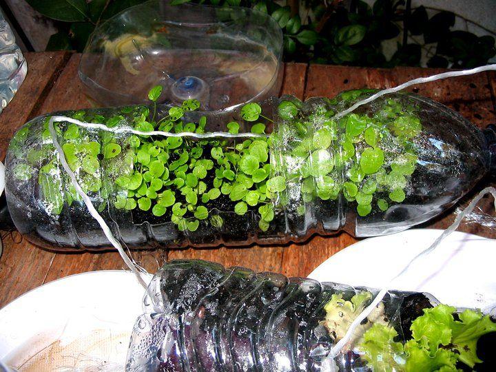 maceta pet | jardin | pinterest | macetas, para el hogar y ideas para