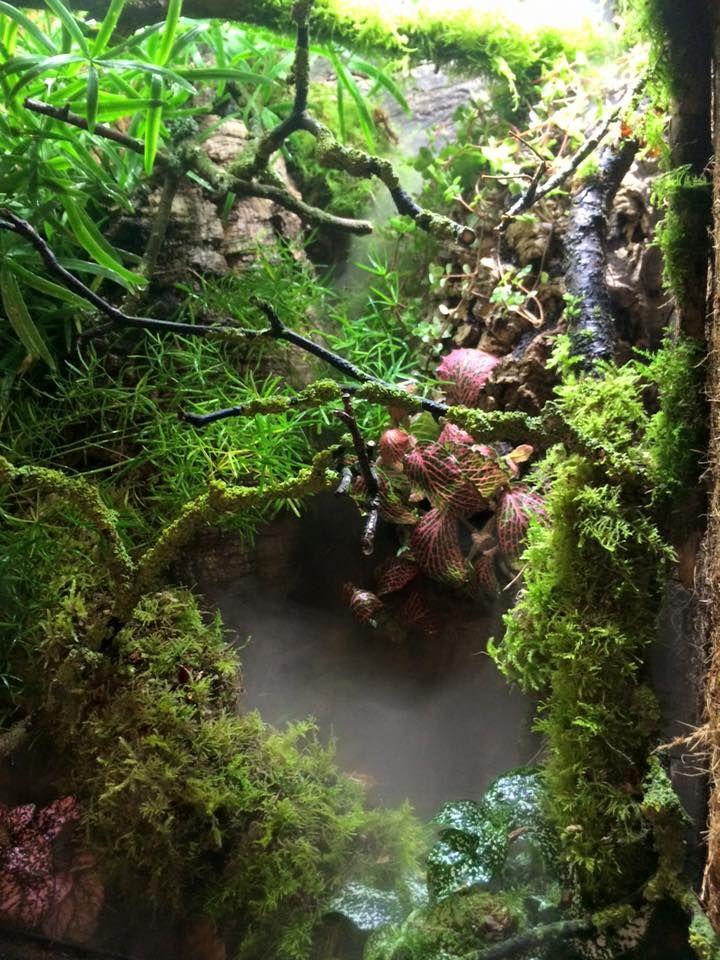 Janine Haime Reptile And Amphibian Bioactive Setups 12 Juli 2015 Reptiles And Amphibians