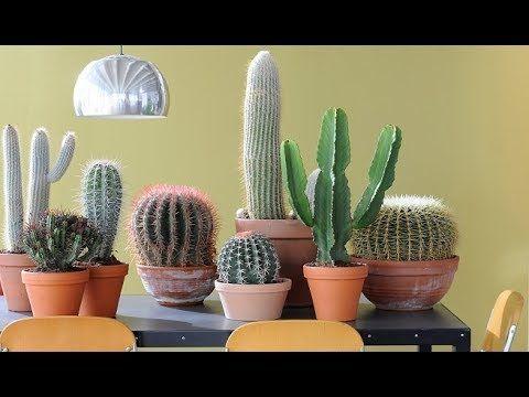 Tipos y nombres de cactus youtube macetas for Cactus tipos y nombres