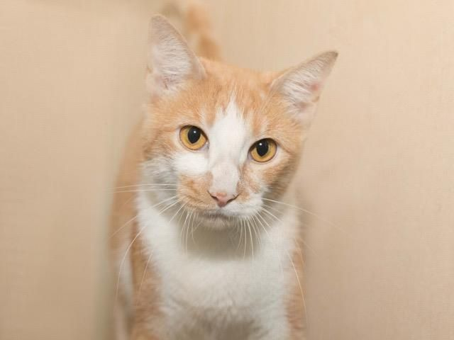 Adopt Honey Boo Boo On With Images Animals Animal Shelter Cats