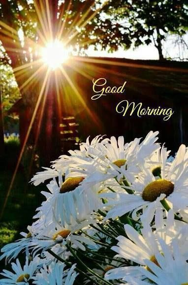 Good Morning Sun And Flowers Pictures Photos And Images For
