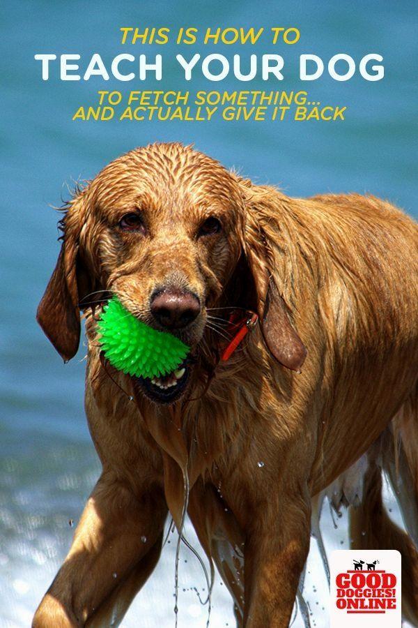 Pin By Steve Rodgers On Dog Training Ideas Dog Training
