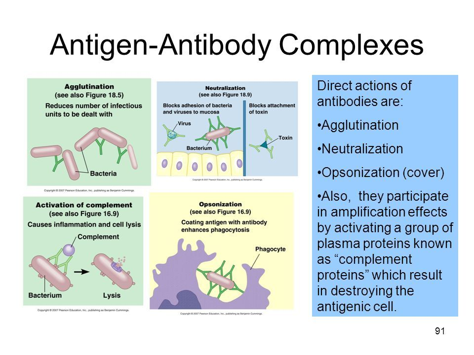 Image result for antibody agglutination complement