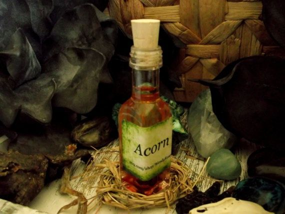witches and acorns | Acorn Oil for Good Luck, Prosperity, Protection and Healing by ...