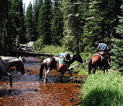 pack horses pictures - Google Search