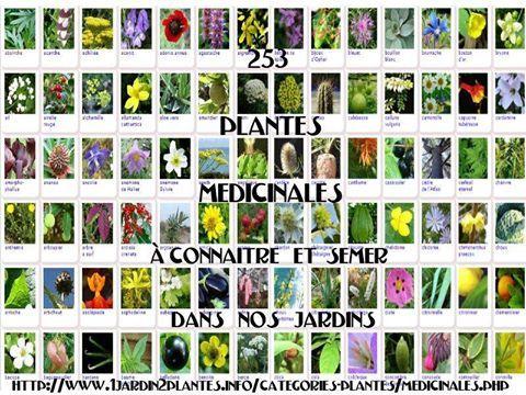 voici une liste de plantes m dicinales healthy plantes aromatiques et m dicinales fleurs. Black Bedroom Furniture Sets. Home Design Ideas