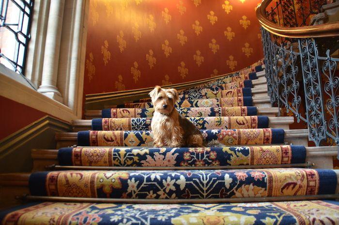 Review St Pancras Renaissance Hotel Pet Friendly Package Pet Hotel Design Renaissance Hotel London Hotels
