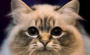 friend  look kitty innocent eyes cat cute