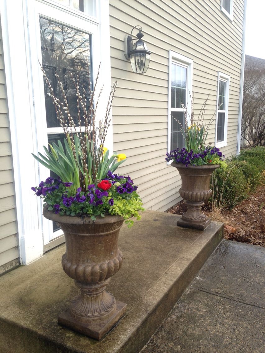 Becker Landscape: Spring containers with daffodils, neon purple ...
