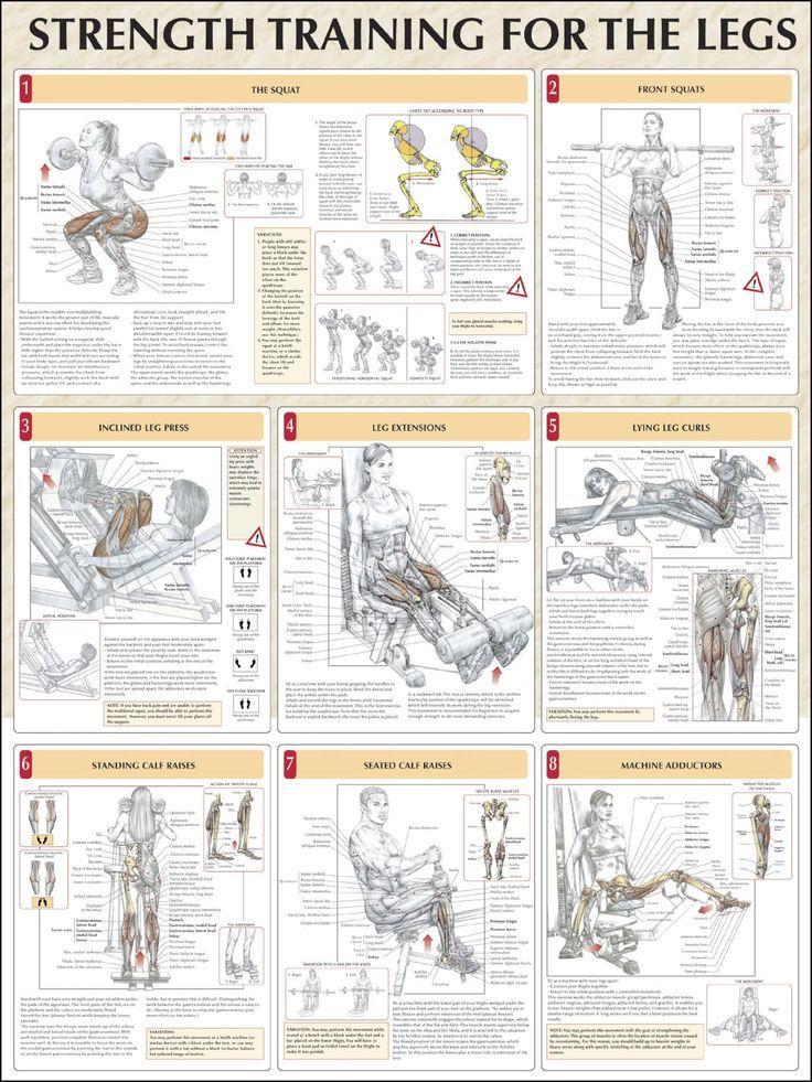 Top 8 Leg Workout ANATOMY | Pinterest | Anatomy, Body workouts and ...