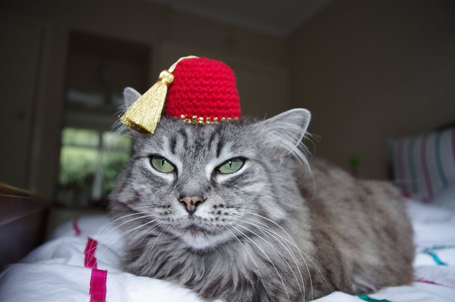 Fez Hat For A Cat Etsy Cats Cats Crazy Cats
