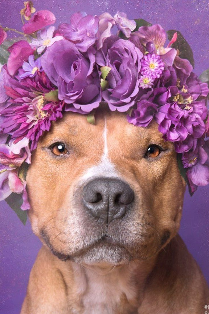 Why I care about pit bulls (and why you should too)