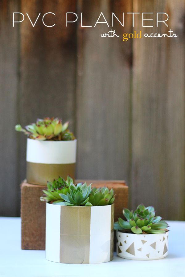Pin On Succulentsair Plantcactus