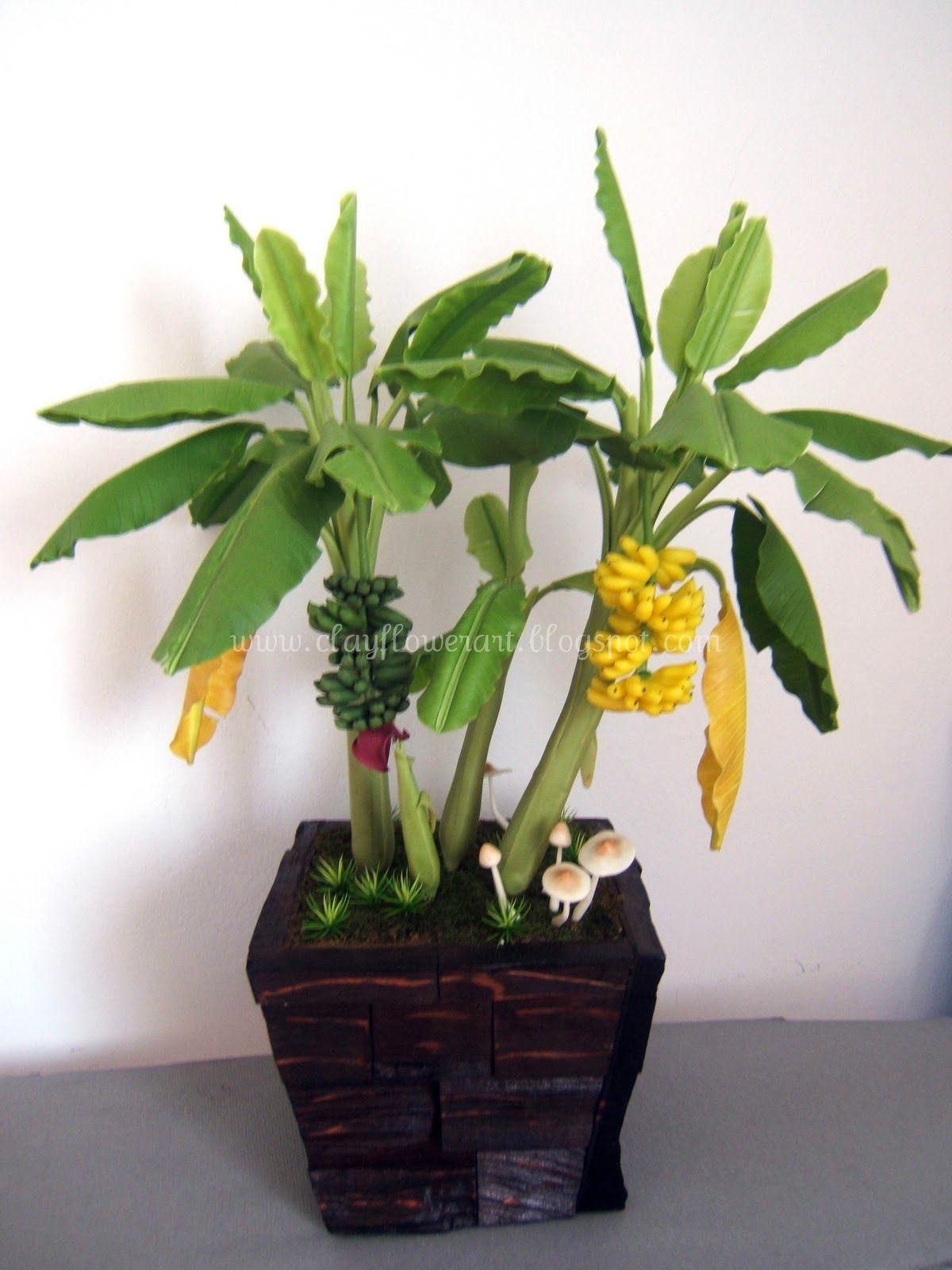 распространено банановое дерево фото комнатное пользуются тушью