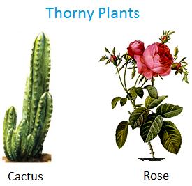 thorny plants plants plants plants grown in water types of plants. Black Bedroom Furniture Sets. Home Design Ideas