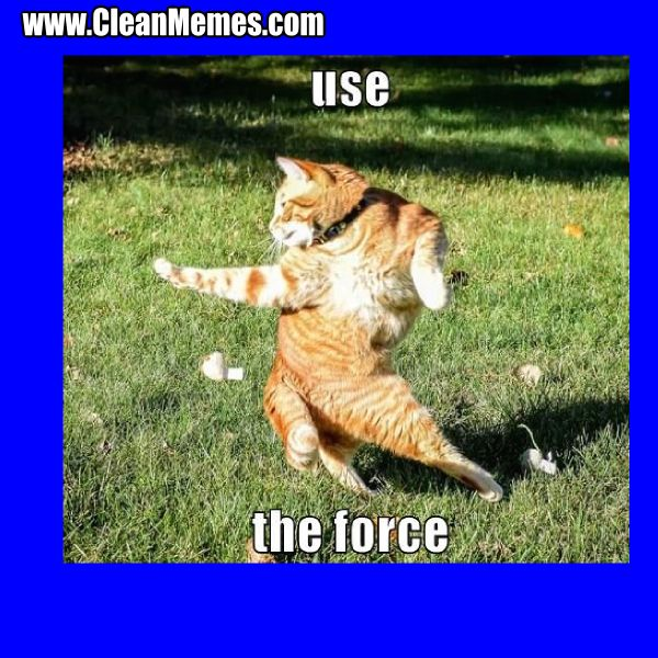 Clean Humour Funny Grumpy Cat Memes Cat Memes Clean Grumpy Cat Meme
