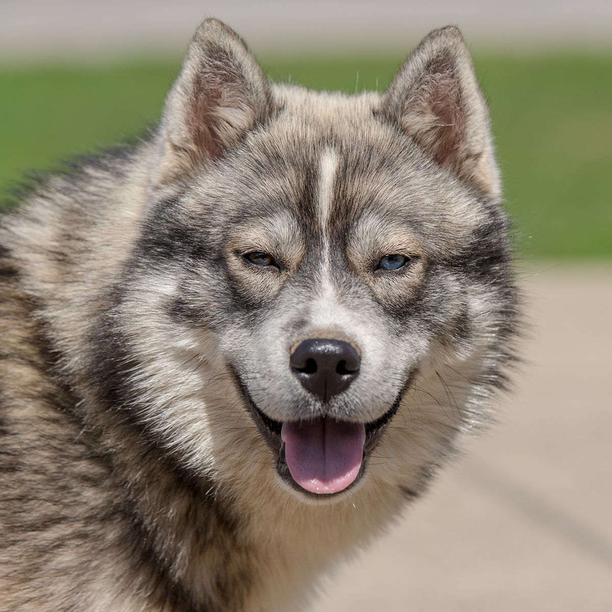 Adopt Mako on Ship dog, Help homeless pets, Dog adoption