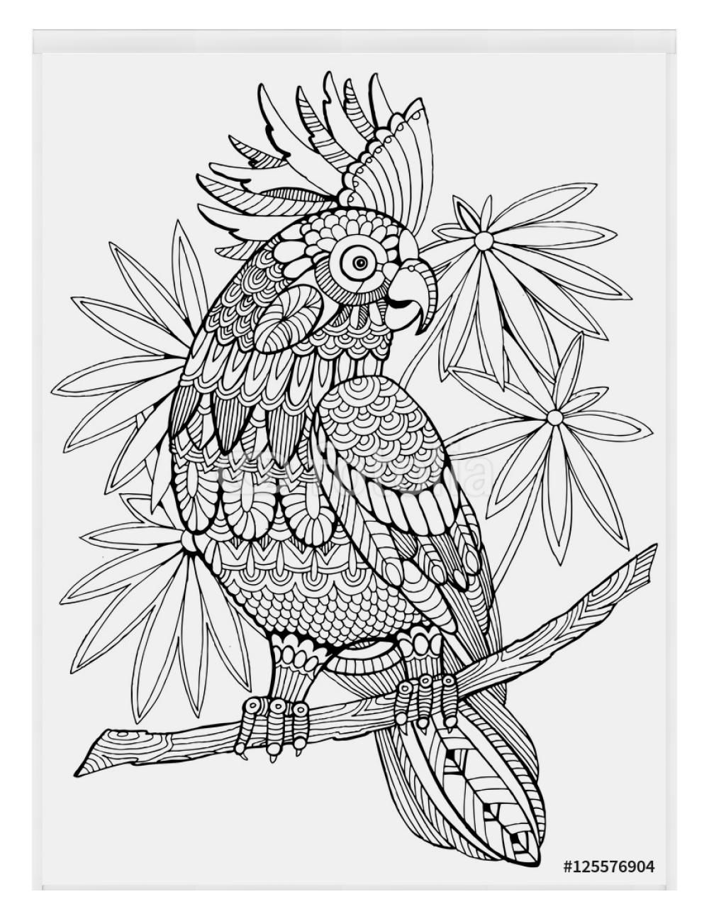 Roleta W Kasecie Kakadu Papugi Kolorowanki Dla Doroslych Wektor Elephant Coloring Page Parrots Art Animal Coloring Pages