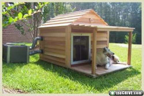 I think Buddy wouldn\'t mind staying in an air conditioned doghouse ...