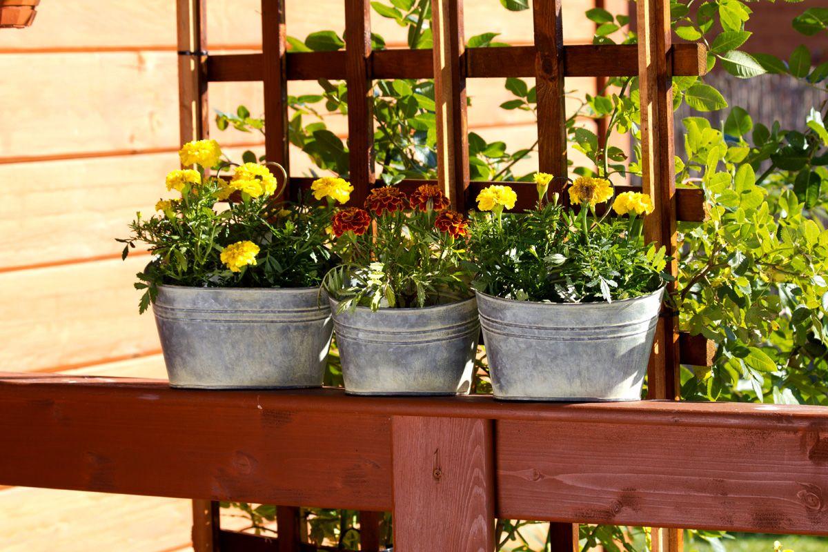 Jakie Kwiaty Kwitna Teraz U Was W Ogrodzie U Mnie Fiolki Niezapominajki Maki I Wiele Wiecej W Polaczeniem Z Doniczkami Tyche Planters Plants Planter Pots