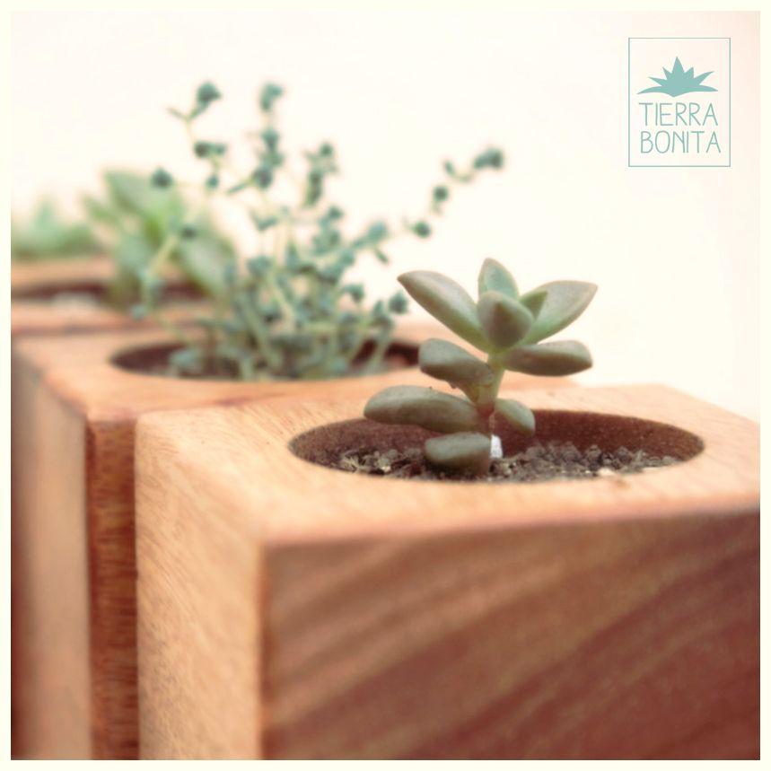 Mini bonita maceta de madera maciza recuperada - Maceta de madera ...
