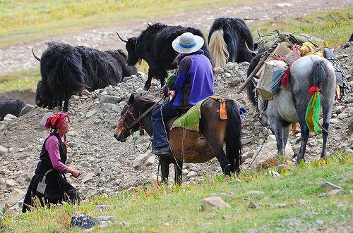 Tibetan nomads, known as འབྲོག་པ། (ndrogba)