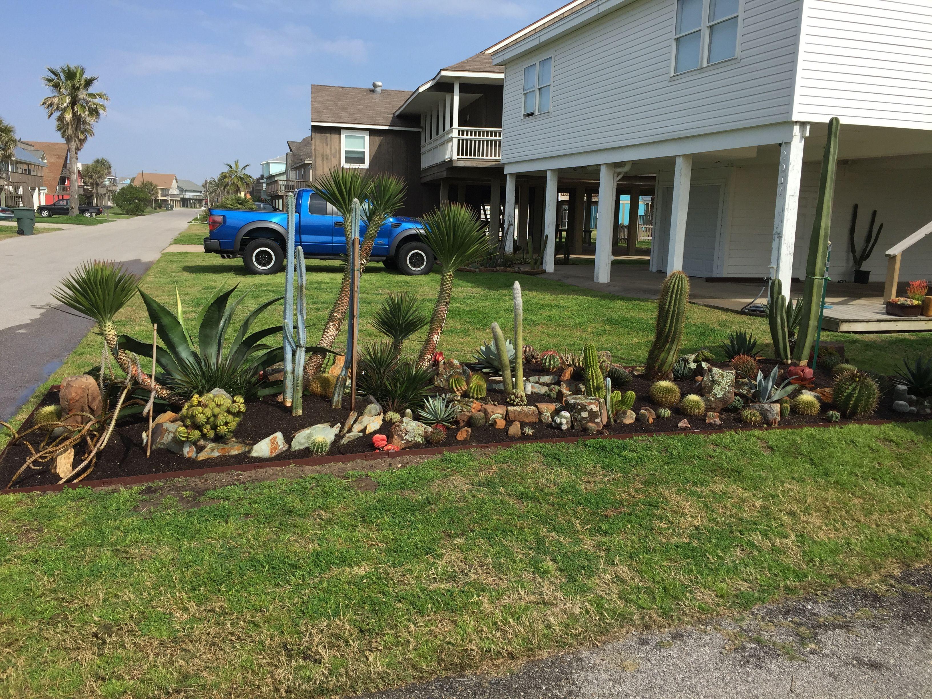 Galveston Garden Cacti And Succulents Succulents Plants