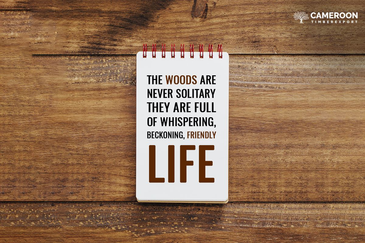 Wood Quote Into The Woods Quotes Wood Lumber